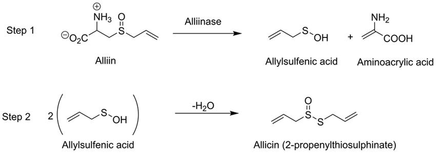 Relastionship of Alliin, Alliinase, Allicin,